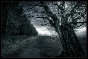 dead_zone_by_zardo