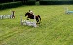 horse_jump
