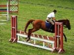 horse_jump_2